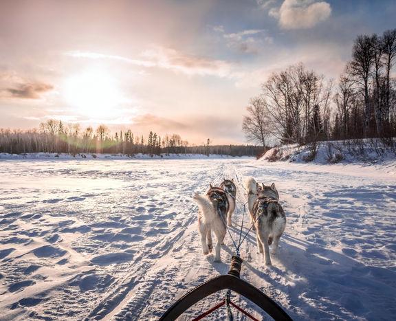 Husky expedition through the forests of Karelia